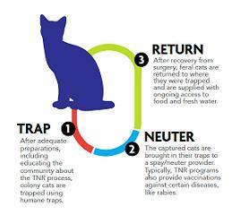 TNR_infographic