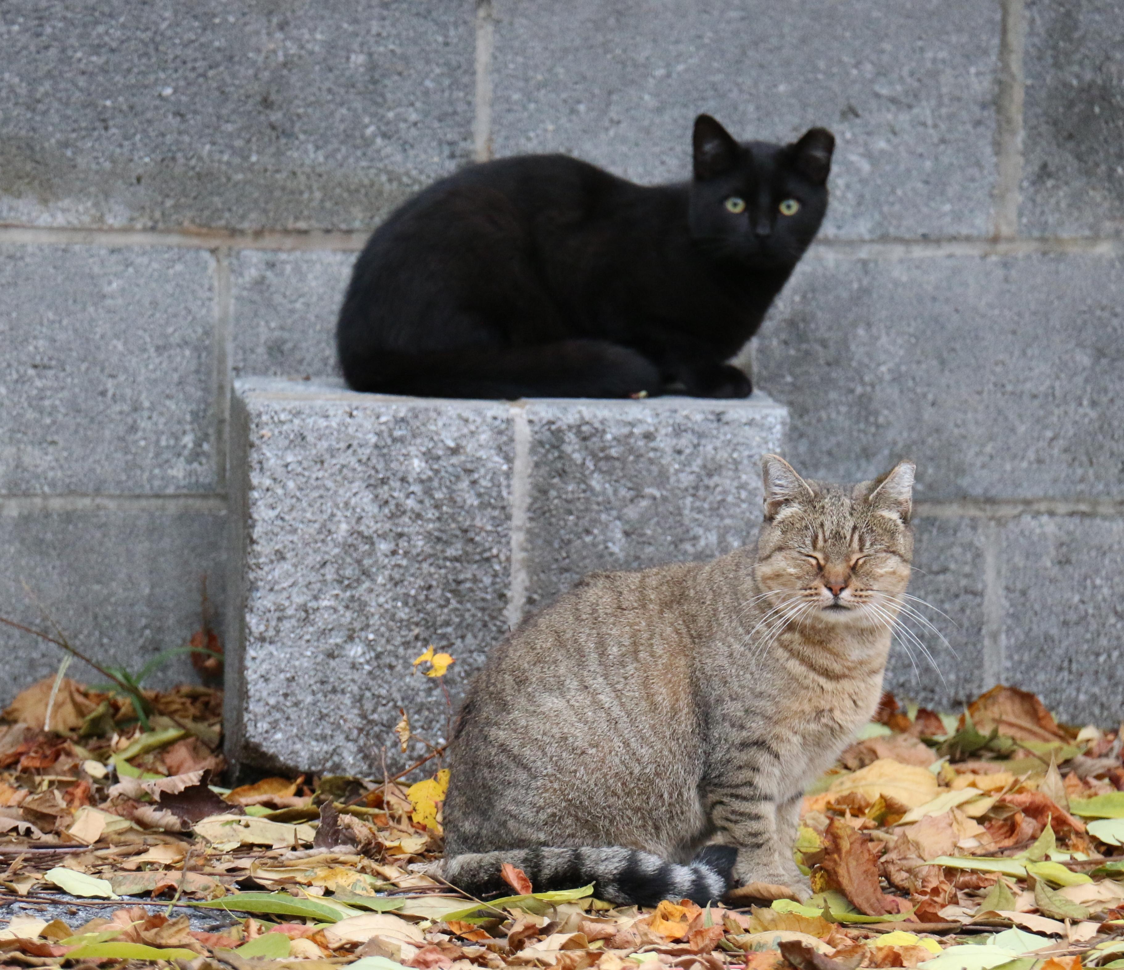 Ziggy and Mitsy